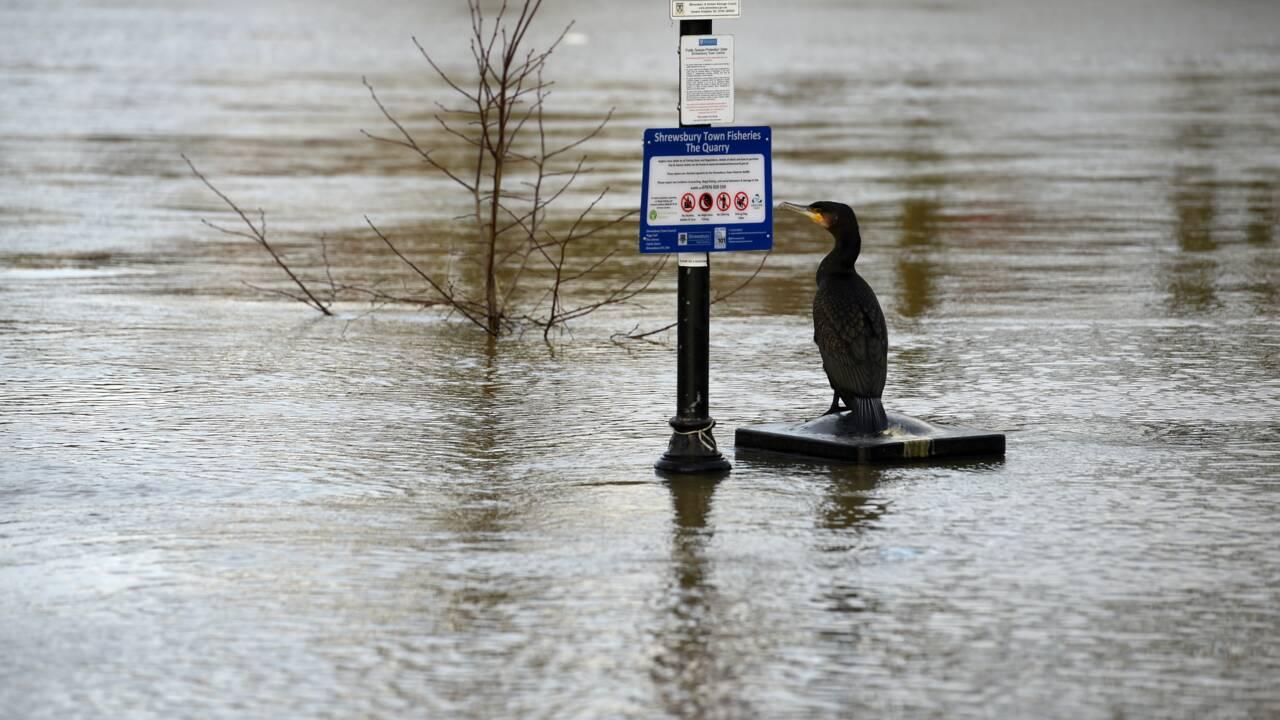 Changement climatique : les Britanniques confinés appelés à donner un coup de main aux scientifiques