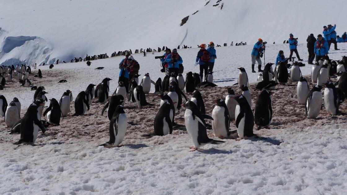 Pourquoi tourisme et Antarctique ne font pas bon ménage