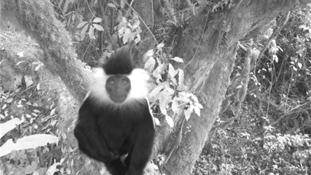 Au Rwanda, des caméras documentent la riche biodiversité d'un parc national