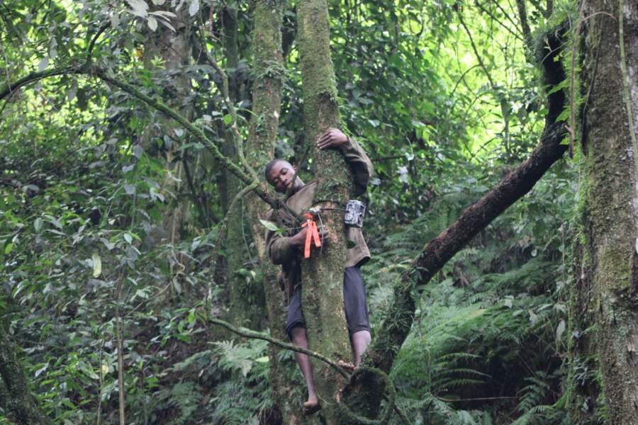 Des caméras au pied et dans les branches des arbres