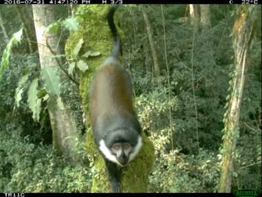 La biodiversité d'un parc national du Rwanda documentée par des caméras