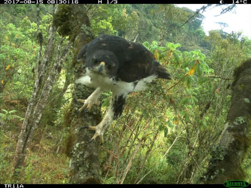 Bonne nouvelle pour la biodiversité