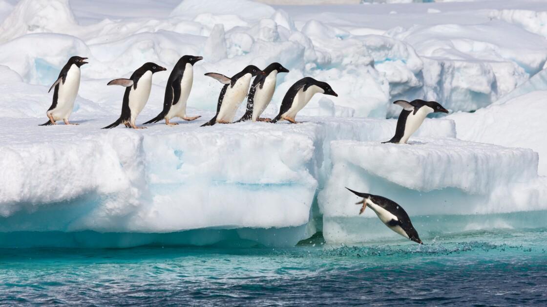 Confinement : aidez les scientifiques à compter les manchots en Antarctique