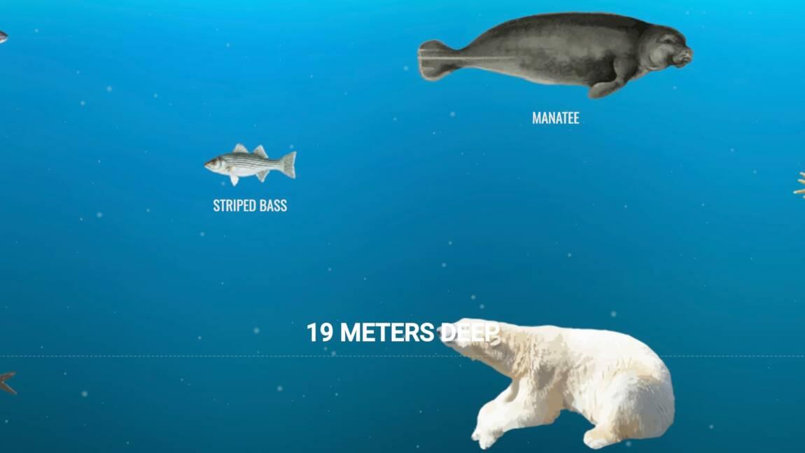 Une infographie propose une plongée virtuelle au plus profond des océans
