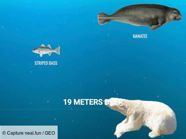 Une infographie propose une plongée virtuelle aux confins des océans