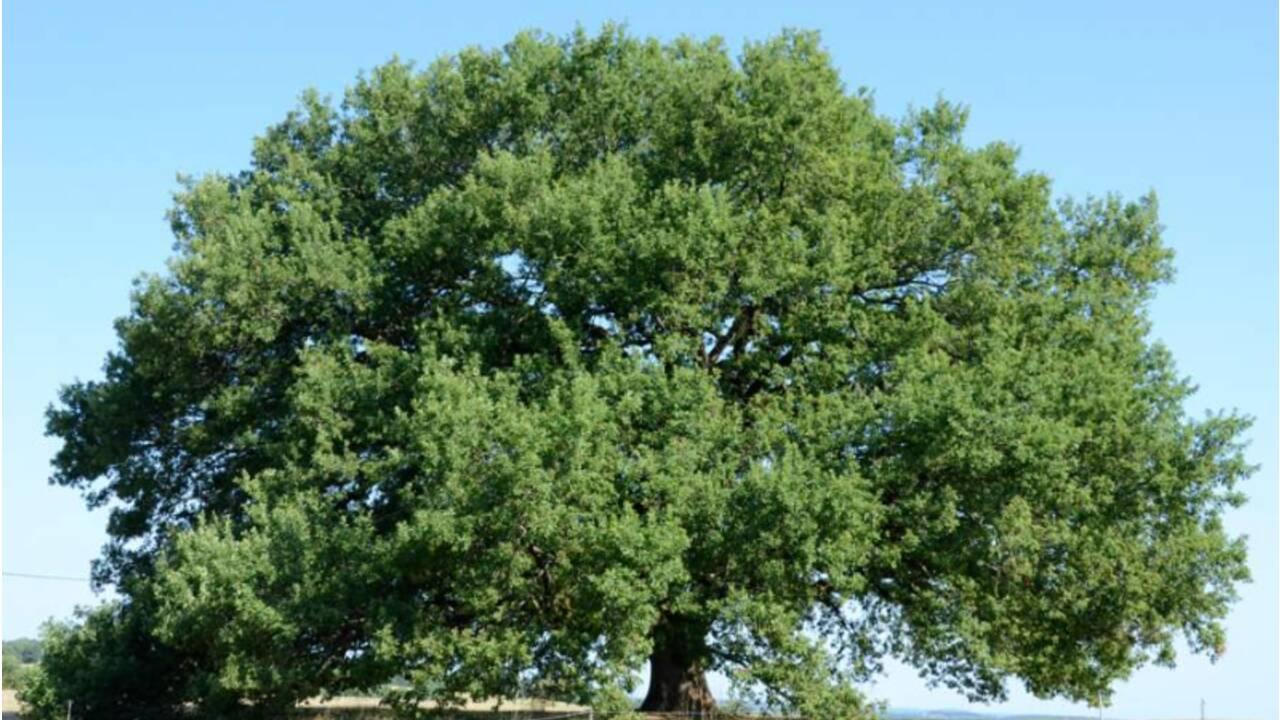 Avec ce film, partez à la découverte des arbres remarquables qui peuplent nos contrées