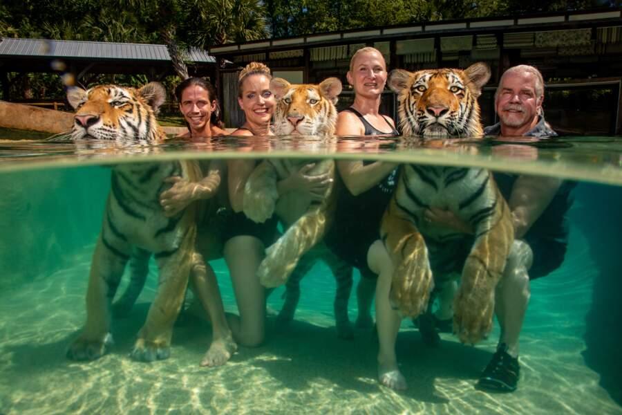 Des tigres en guise de voisins