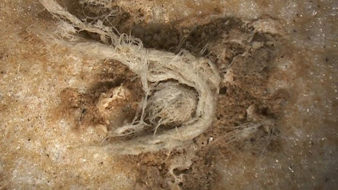 En Ardèche, un site révèle les restes d'une corde fabriquée il y a 40000 ans par Néandertal