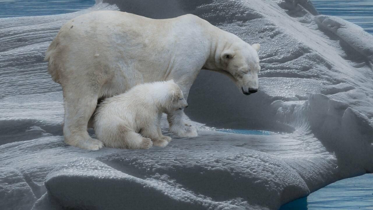 Le pôle Nord pourrait bientôt être dépourvu de glace en été