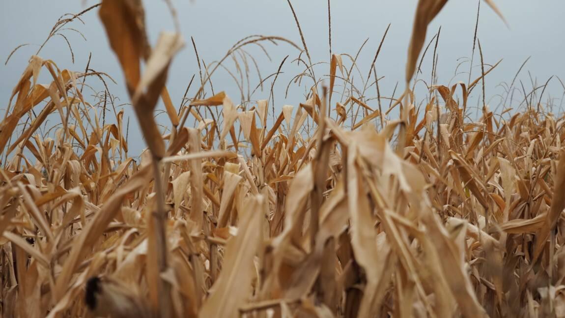 Les agriculteurs déjà confrontés à la sécheresse, la FNSEA demande des  mesures d'urgence