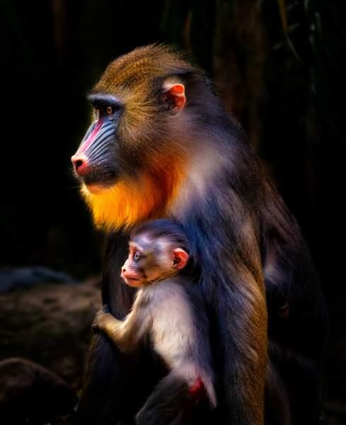 Mère et petit