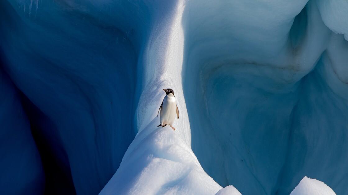 Les plus belles photos de nature et de voyage récompensées par le concours du Smithsonian