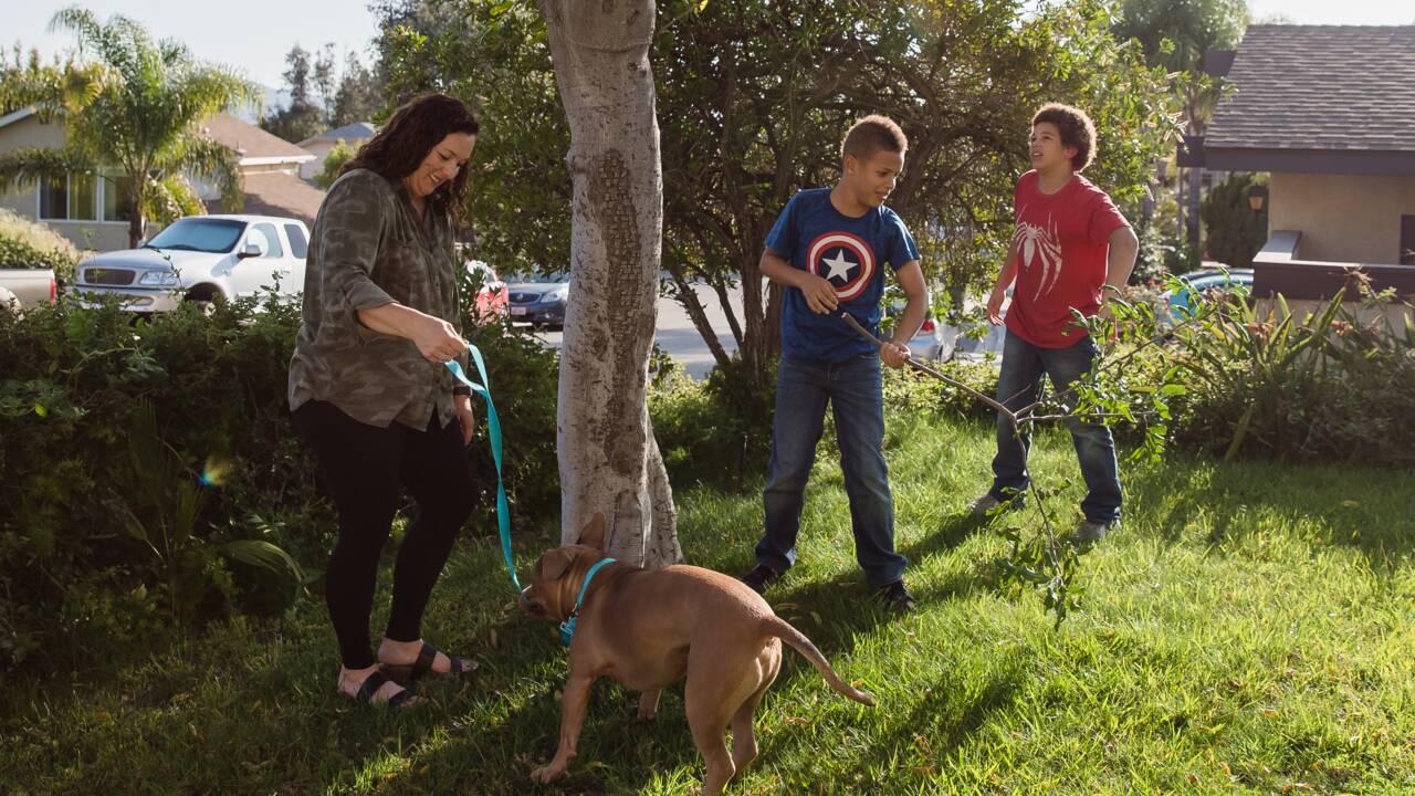 Confinement : les adoptions d'animaux s'envolent aux Etats-Unis
