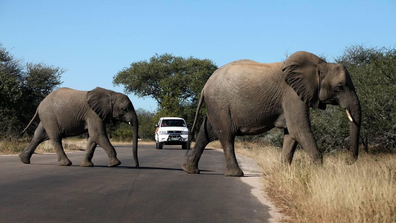 Confinement : en Afrique du Sud, le tourisme des safaris à la peine