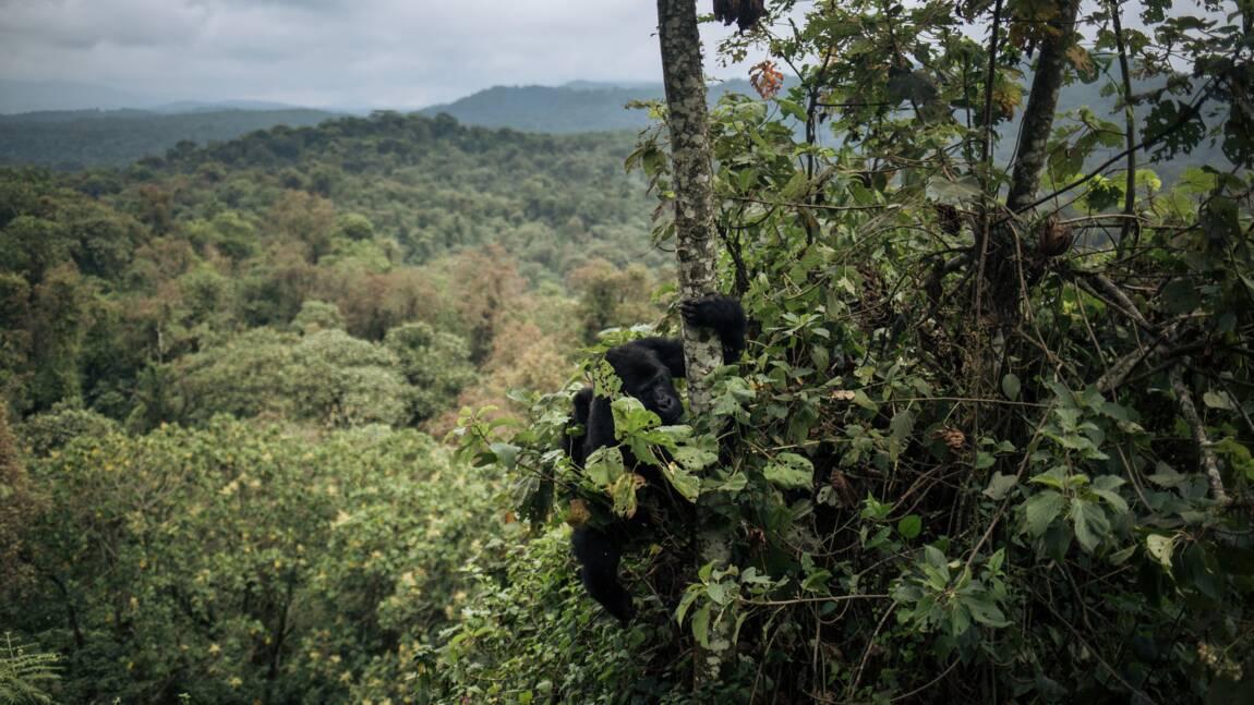Le recul de la forêt africaine s'accélère, selon un rapport