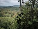 Le recul s'accélère en Afrique pour la forêt, mère nourricière des plus fragiles