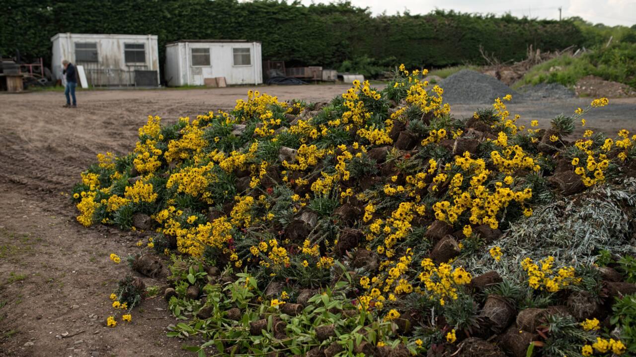 L'histoire d'amour des Britanniques avec le jardinage contrariée par le confinement