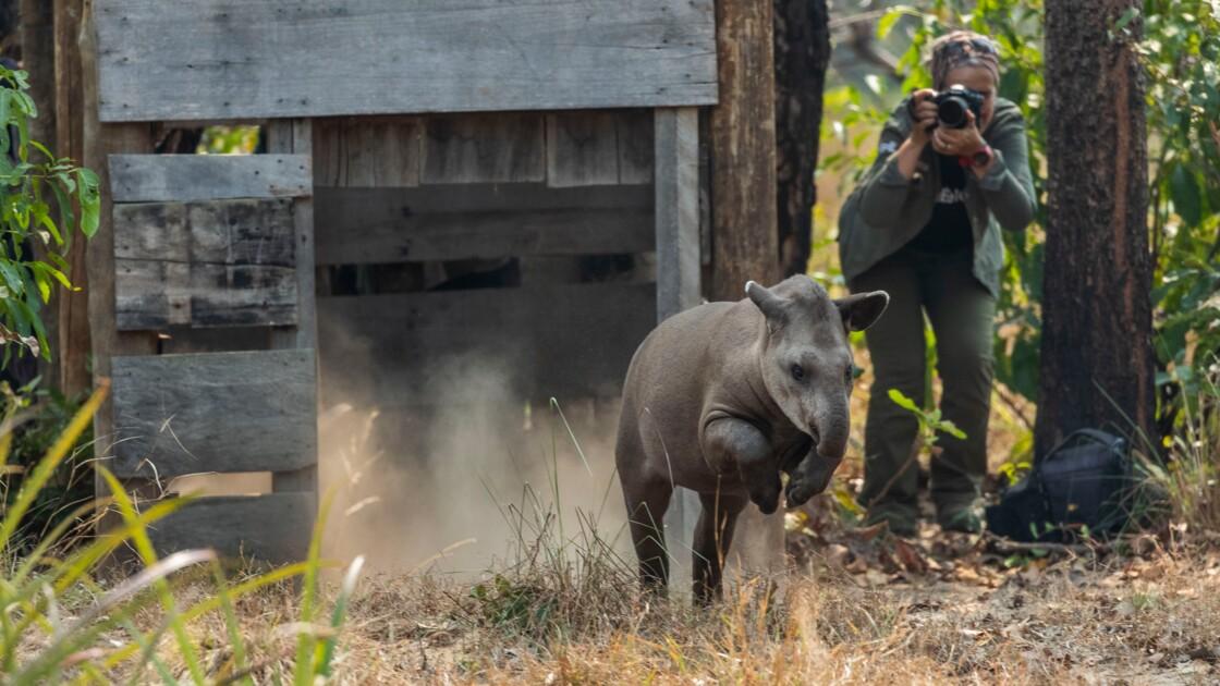 """Whitley Awards 2020 : Découvrez les sept défenseurs de la nature récompensés aux """"Oscars de l'environnement"""""""
