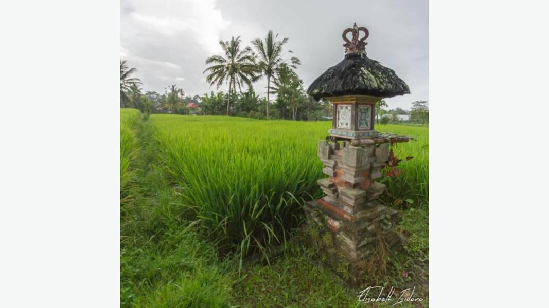 Autel dressé dans les rizières servant à honorer la Déesse de la fertilité et du riz, Dewi Sri