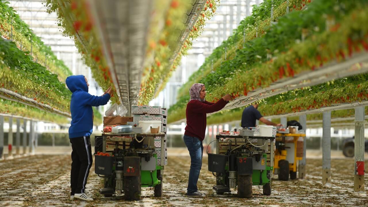 Lait, vin, pommes de terre: que faire des excédents de la crise du coronavirus?