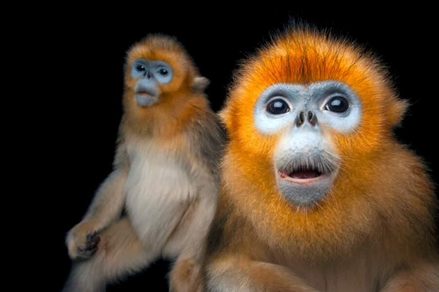 Les singes qui venaient du froid