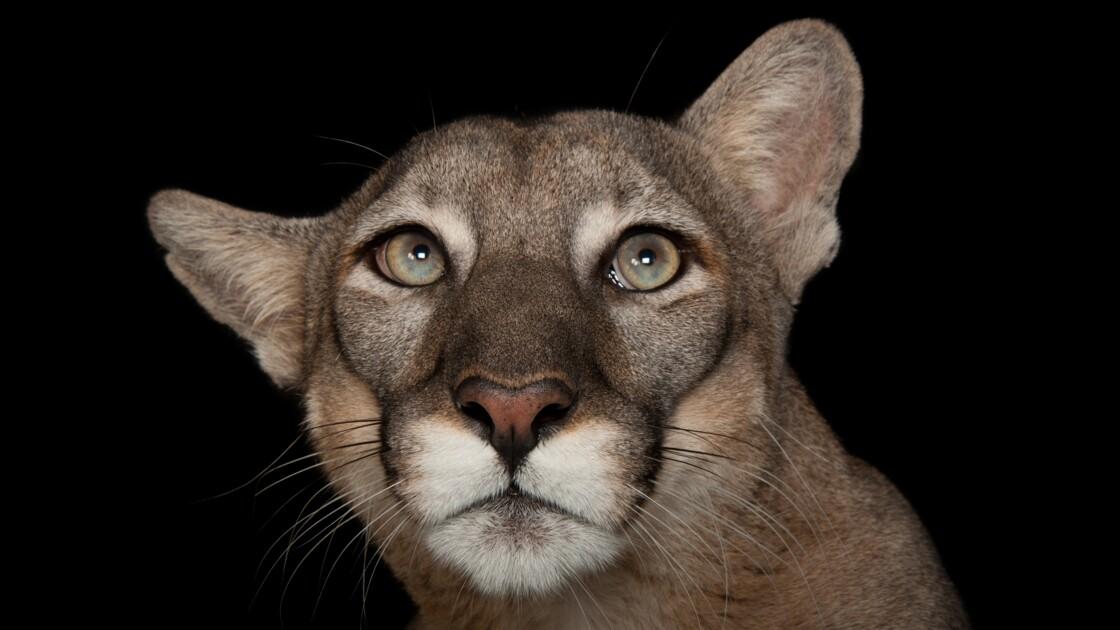 Faune menacée, faune magnifiée : ces animaux en voie de disparition vus par Joel Sartore