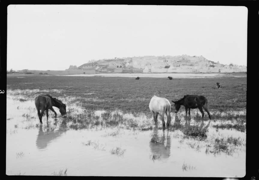 Quiétude palmyrénienne, mai 1929