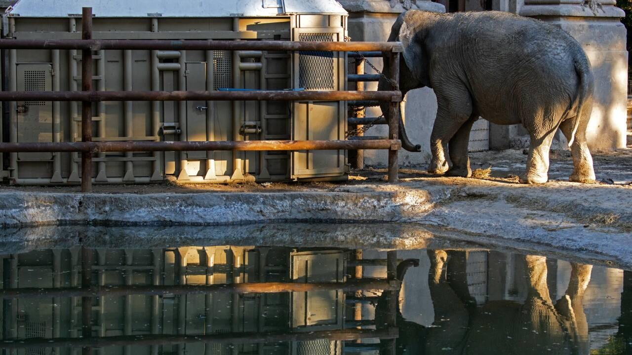Brésil : à plus de 50 ans, une nouvelle vie pour une éléphante