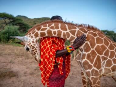 Photos de la faune sauvage : les clichés lauréats du concours Big Picture 2020