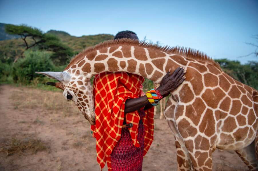 Les gardiens des girafes