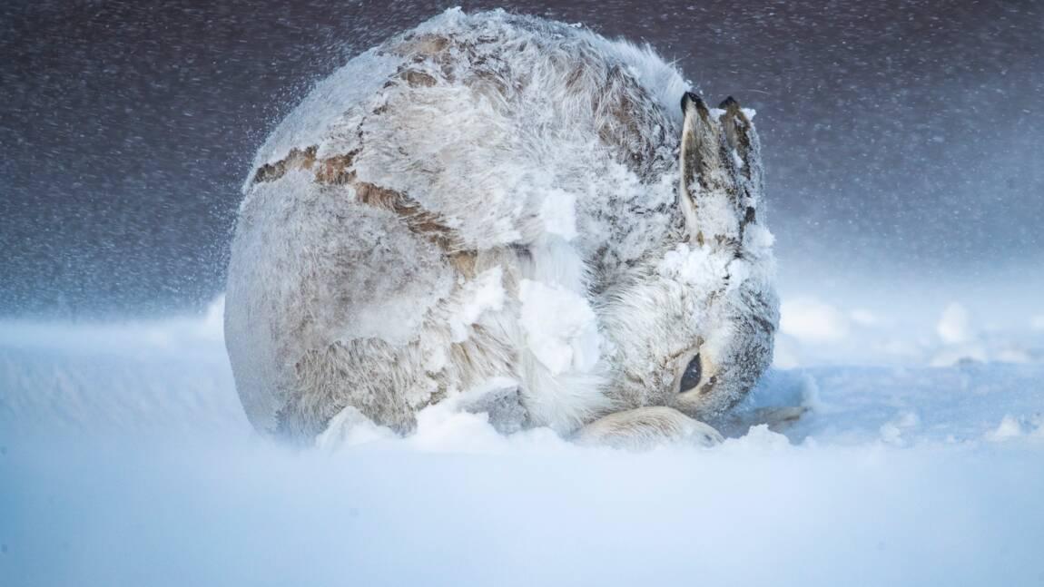 Les plus belles photos d'animaux sauvages et de nature 2020 récompensées par le concours Big Picture