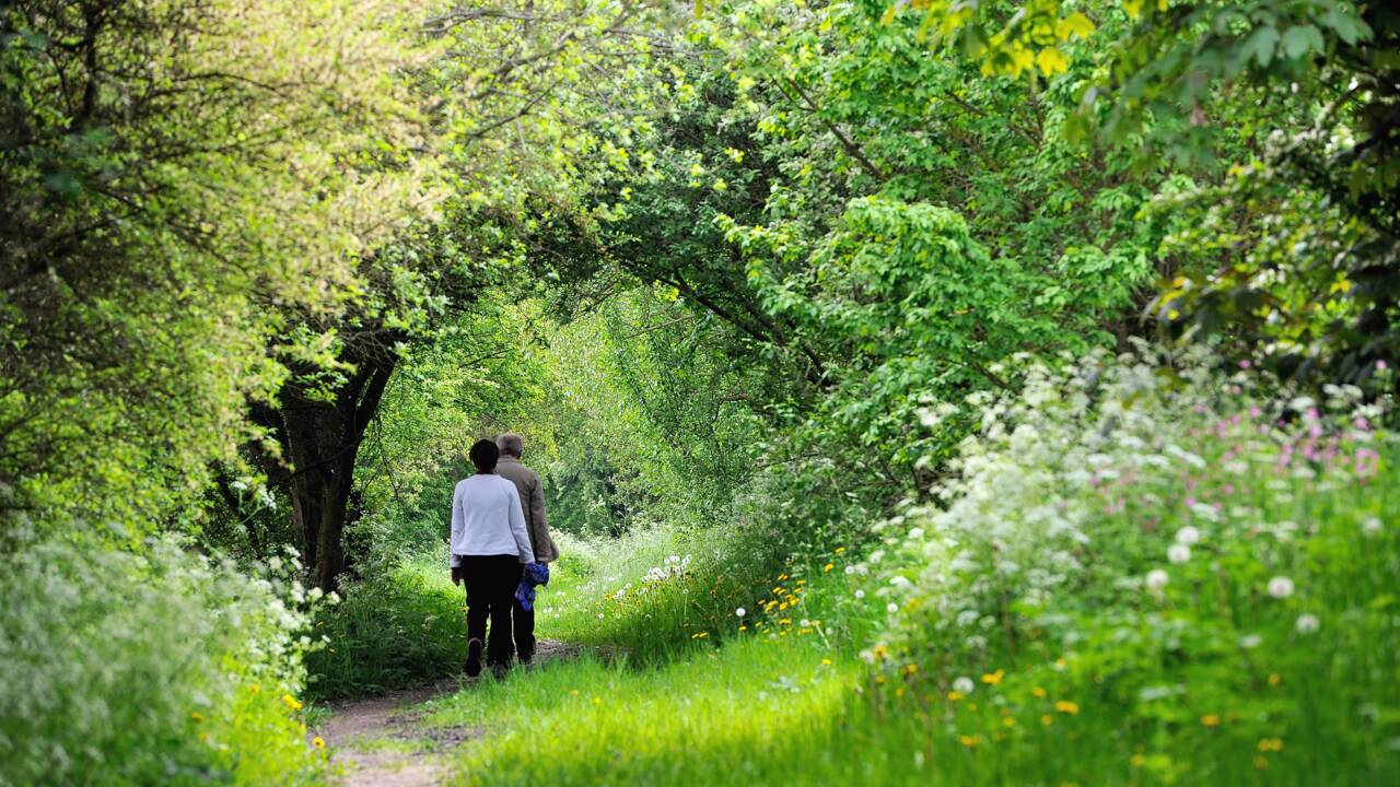 Dans les forêts d'Ile-de-France, concilier quiétude des animaux et besoin de nature