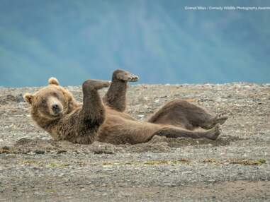 Comedy Wildlife Photography Awards : 10 drôles de photos d'animaux soumises au concours 2020