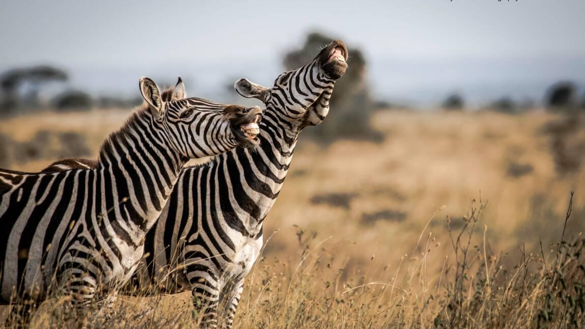 Découvrez 10 drôles de photos d'animaux soumises aux Comedy Wildlife Photography Awards