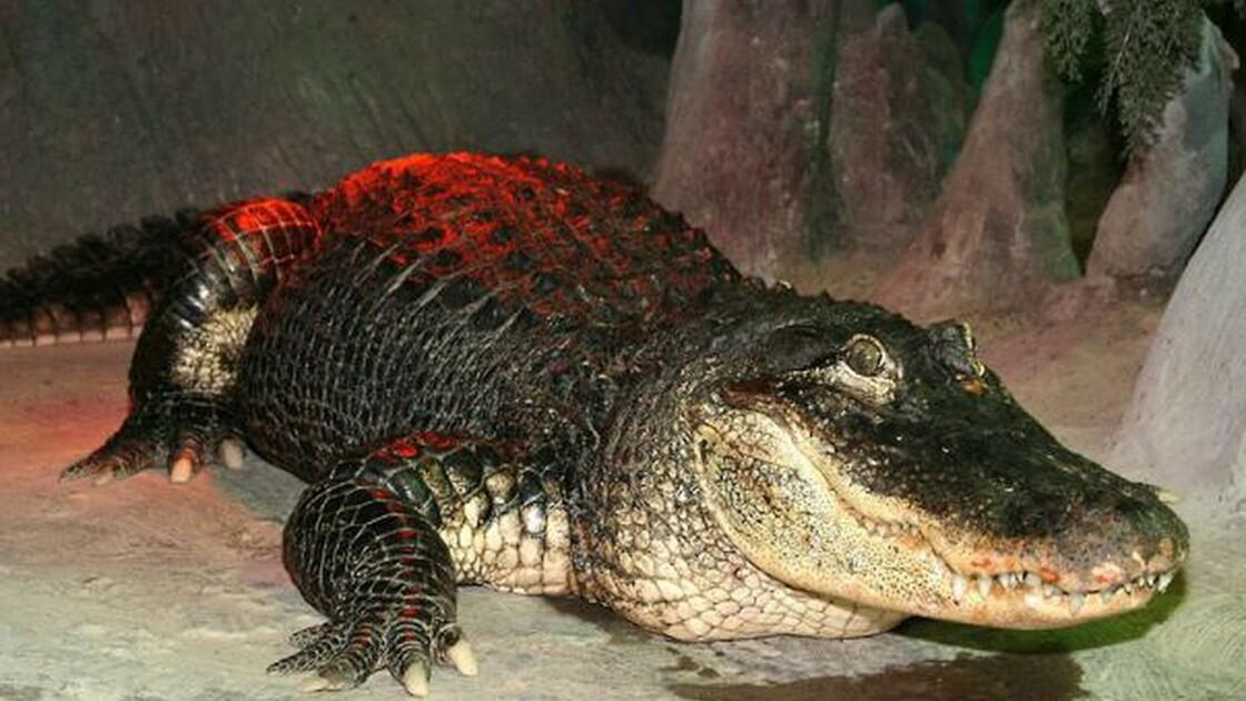 Saturne, l'alligator légendaire du zoo de Moscou est mort à l'âge de 84 ans