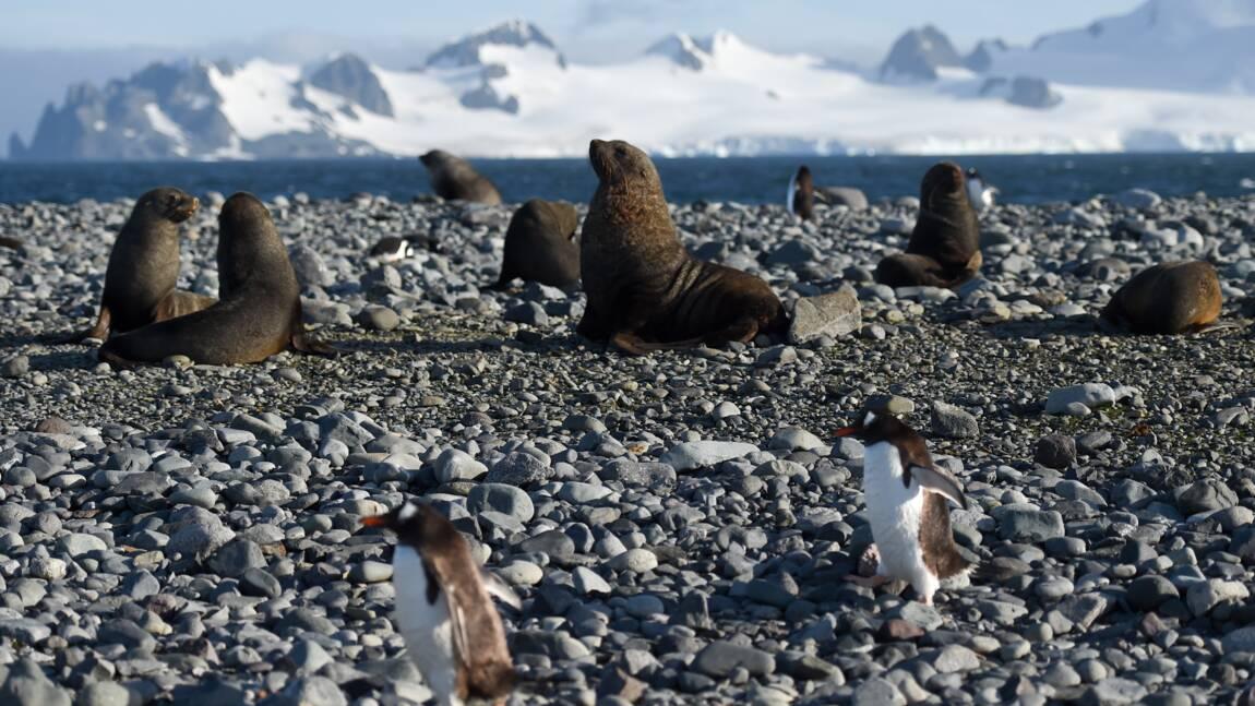Réchauffement: les espèces migrent plus vite vers les pôles en mer que sur terre