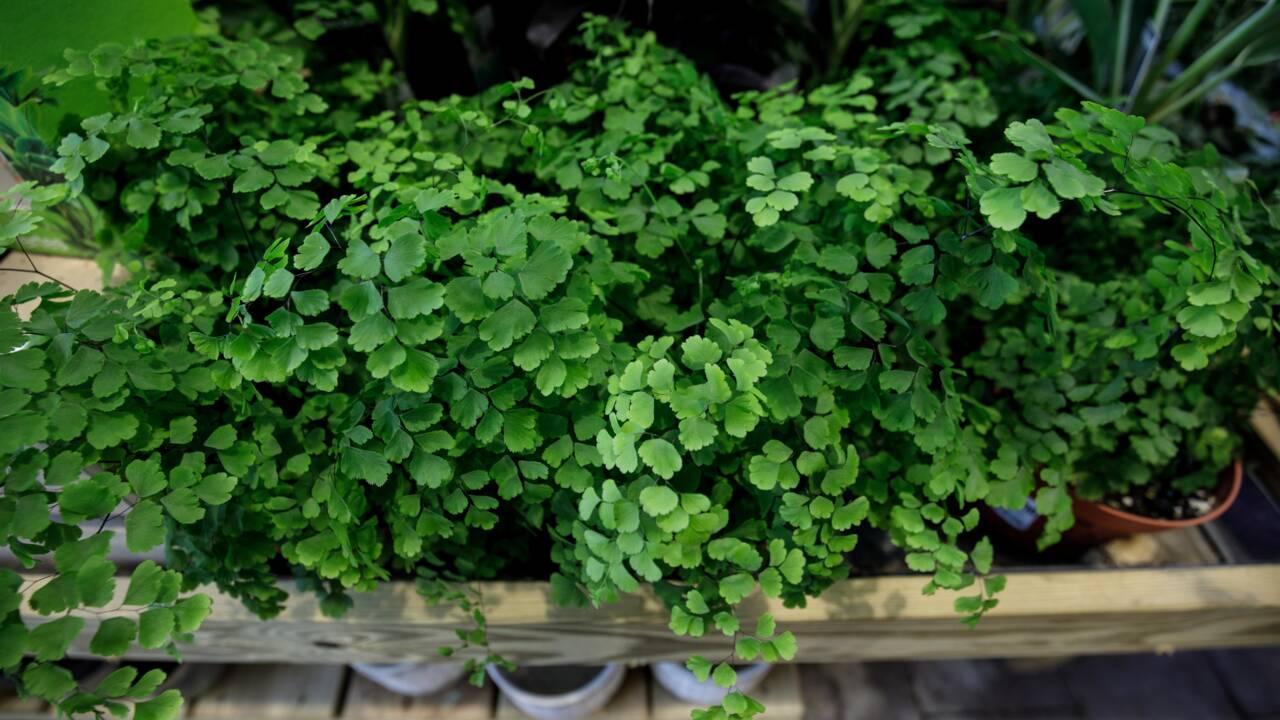 Des plantes, du bois, de l'eau... La vie au bureau sera-t-elle plus verte après la crise sanitaire ?