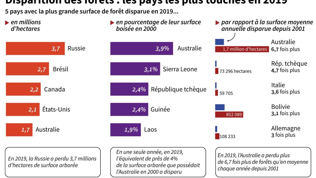 Forêts primaires en danger : quels sont les pays les plus touchés ?