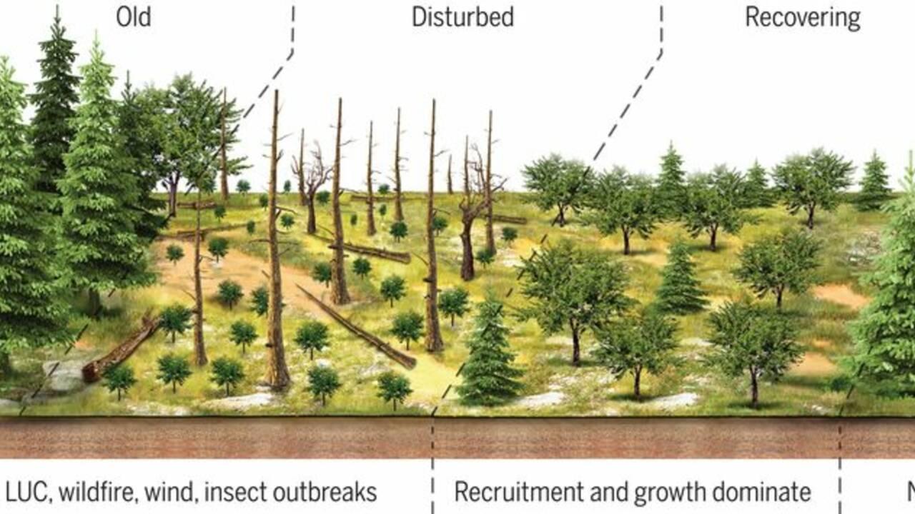 Les arbres deviennent de plus en plus petits à cause du changement climatique