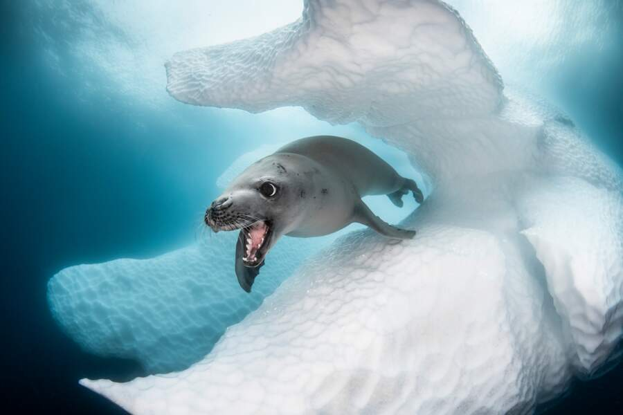 Face à face sous les glaces du continent blanc