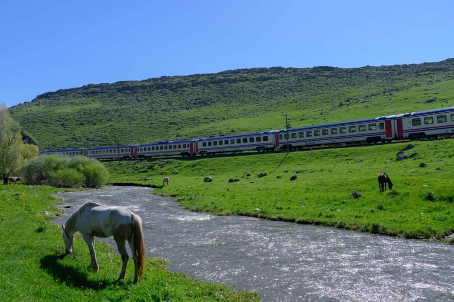 Quand les chevaux regardent passer les trains…