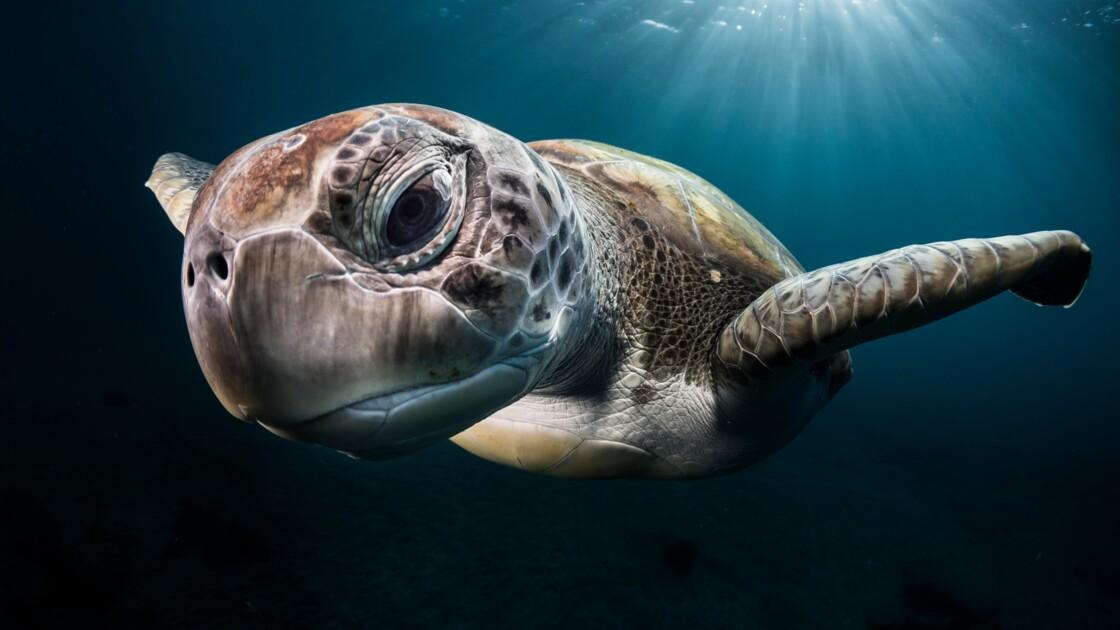 Greg Lecœur, ce photographe virtuose des océans qui veut protéger la vie sous-marine