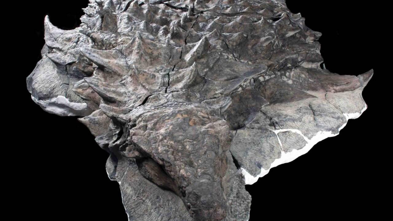 Le dernier repas d'un dinosaure vieux de 110 millions d'années découvert très bien préservé