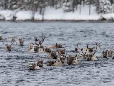 Québec : les animaux sortent de leur repos hivernal