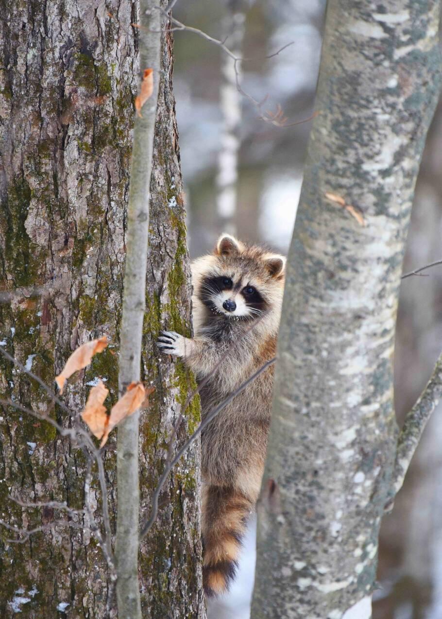 Photos : quand la faune accueille le printemps dans les espaces naturels du Québec