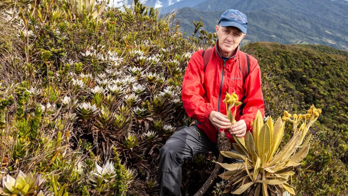 Découverte en Colombie d'une plante essentielle pour la préservation de l'eau