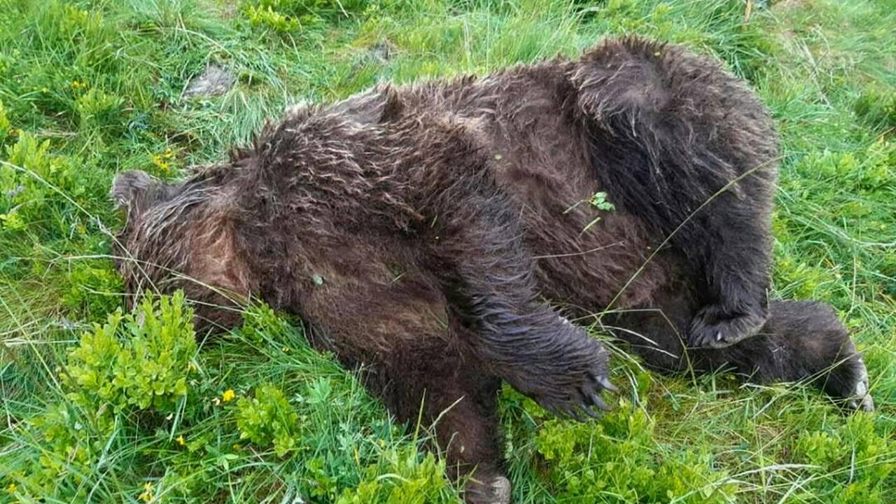 Ours tué: Sea Shepherd offre 10.000 euros pour accélérer l'enquête