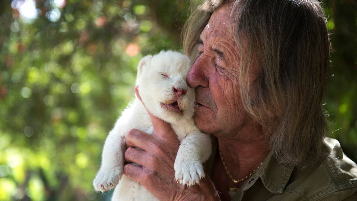 White King, un bébé lion blanc négligé par sa maman en Espagne