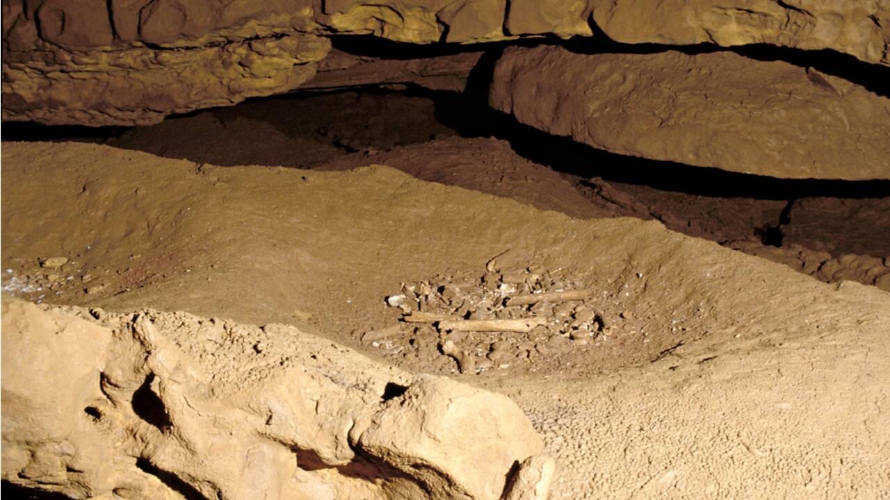 En Dordogne, une grotte révèle des squelettes vieux de 30000 ans déposés dans des nids d'ours