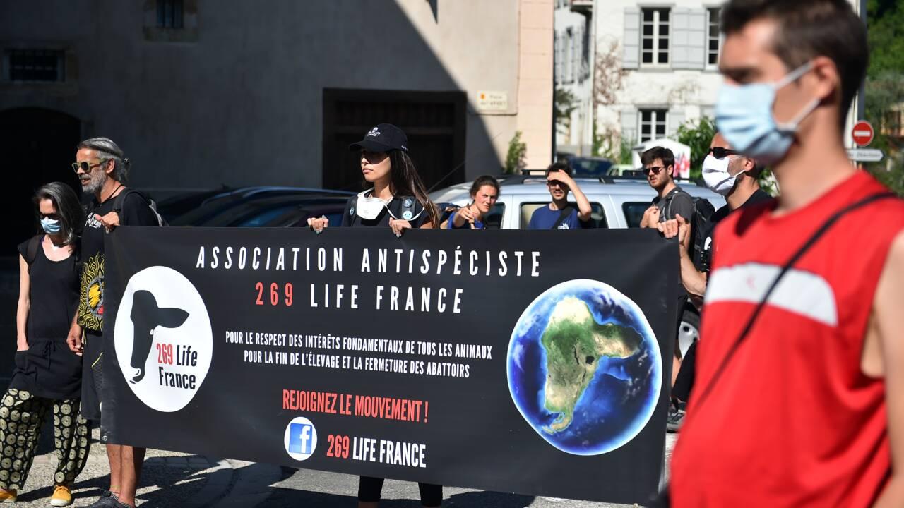 A Foix, la manifestation des défenseurs de l'ours a eu lieu, sans heurts